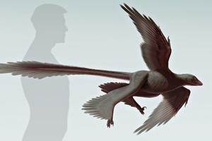 Νεός δεινόσαυρος με φτερά ανακαλύφθηκε στην Κίνα