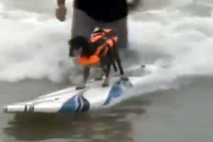 Σκύλοι σέρφερ στην Καλιφόρνια