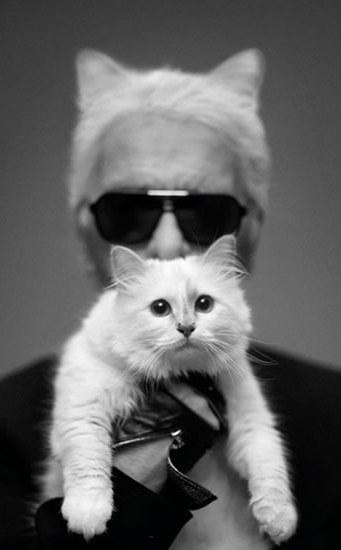 Τοπ μόντελ... η γάτα του Λάγκερφελντ karlcat7