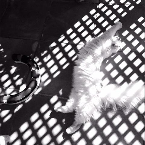 Τοπ μόντελ... η γάτα του Λάγκερφελντ karlcat9