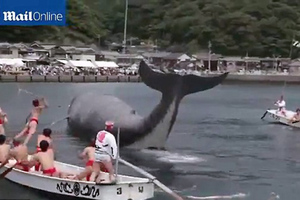 Φεστιβάλ-σφαγής φαλαινών