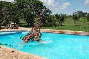 Η πισίνα δεν ήταν στα μέτρα της