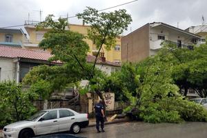 Πτώση δέντρου στην Κοζάνη
