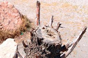 Άφησαν την παραλία γυμνή από δέντρα