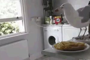Ο κλέφτης της κουζίνας