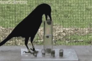 Το έξυπνο πουλί