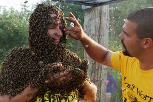 Γένια από... μέλισσες