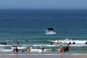 Κολυμπώντας με τα δελφίνια