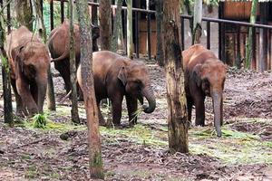 Διακινητές έκαναν τους ελέφαντες… ναρκομανείς