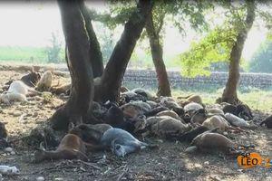 Κεραυνός σκότωσε κοπάδι στη Θεσσαλονίκη