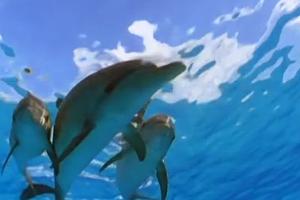Εντοπίστηκε νεκρό δελφίνι σε παραλία στο Ληξούρι