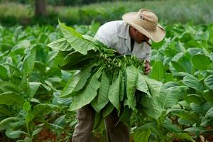 Έρευνες για διαφθορά στην British American Tobacco
