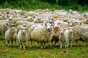 Εντός ημερών η απόφαση για αποζημίωση σε κτηνοτρόφους