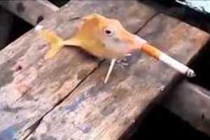 Παρανοϊκοί ψαράδες ανάγκασαν ψάρι να καπνίσει