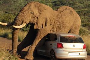 Η Ζιμπάμπουε γέμισε… ελέφαντες και δεν ξέρει τι να τους κάνει