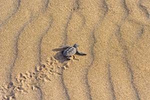 Δημόσιες εκσκαφές φωλιών θαλάσσιας χελώνας στο Ρέθυμνο