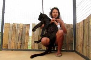 Λεοπάρδαλη πέφτει στην αγκαλιά της γυναίκας που τη μεγάλωσε