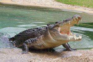 Αυτοκτόνησε πέφτοντας στη λίμνη με τους κροκόδειλους