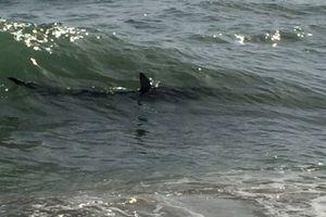 Καρχαρίες εμφανίστηκαν στις ακτές της Ιταλίας