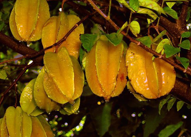Φρούτο του αστεριού