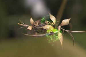 Τα έντομα μειώνονται ραγδαία σε ολόκληρο τον κόσμο