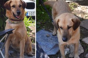 Σκύλος χάθηκε στη Νέα Μάκρη