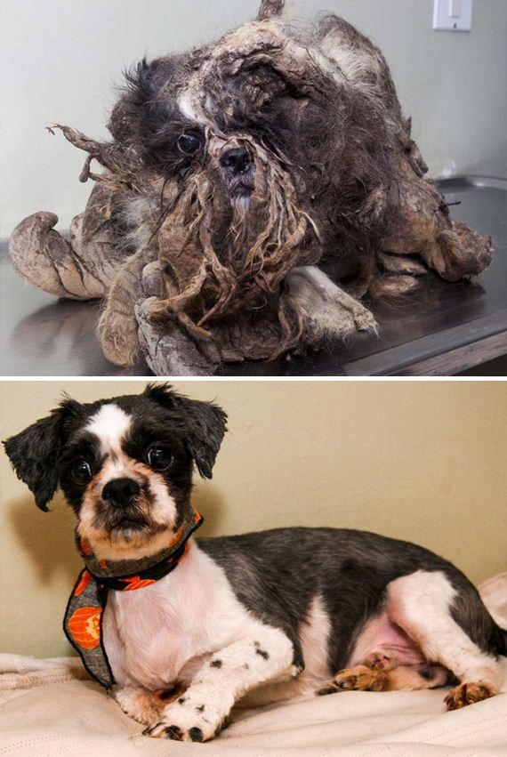 Σκύλος μεταμόρφωση διάσωση