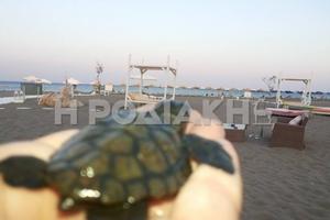 Επιχείρηση διάσωσης για δέκα νεογέννητα χελωνάκια στη Ρόδο