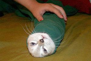 Γάτες... μπουρίτος