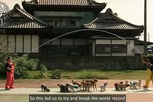 Δεκατρείς σκύλοι πηδάνε σχοινάκι