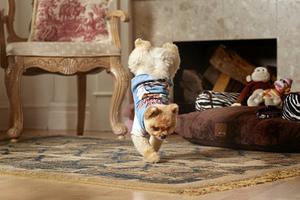 Ο γρηγορότερος σκύλος του κόσμου στα δύο πόδια