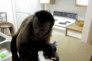 Η μαϊμού που λατρεύει τις τηγανιτές πατάτες