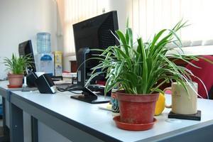 Ο ρόλος των φυτών στην παραγωγικότητα μέσα στο γραφείο