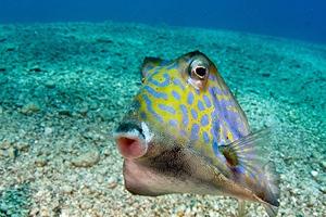 Το ψάρι που λατρεύει το φακό