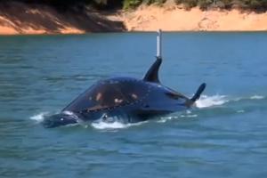 Οργώνοντας τα νερά μέσα σε ένα... καρχαρία