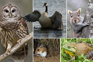 Περιβαλλοντικές απειλές που τίθενται από ζώα