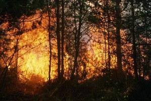Ο ρόλος των δασικών πυρκαγιών στην υπερθέρμανση του πλανήτη