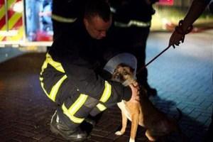 Δεκαπεντάχρονος έκαψε καταφύγιο προστασίας σκύλων