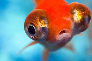 Επίμονοι μύθοι που περιβάλλουν τα ζώα