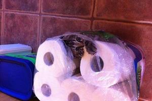 Γάτες τρυπώνουν όπου βρουν
