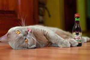 Κυκλοφόρησε κρασί ειδικά για... γάτες