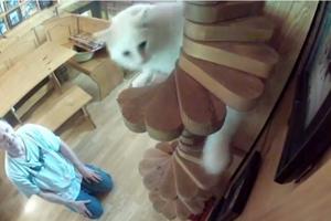 Έκανε το σπίτι του παράδεισο για γάτες