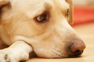 Έδεσαν σκύλο και τον άφησαν να πεθάνει από την πείνα
