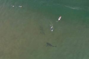 Τεράστιος καρχαρίας κολυμπάει κάτω από σέρφερ