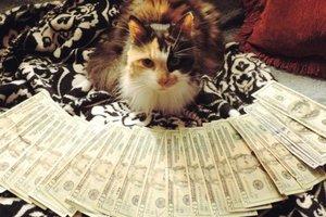 Γάτες και φράγκα