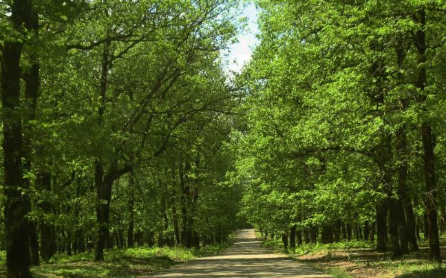 Αποτέλεσμα εικόνας για δάση στην ελλάδα