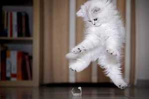 Γάτες... νίντζα