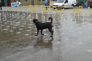 Δηλητηρίασαν σκύλο στην Ερέτρια