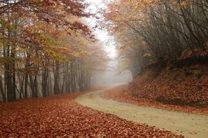 Τα χρώματα του φθινοπώρου στην Ελλάδα