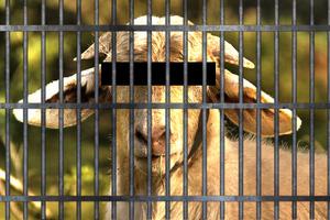 Ζώα που κατέληξαν στη φυλακή!